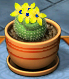 Spotted Ball Cactus
